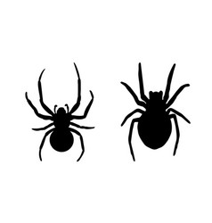 spider black widow set black bug spider vector image