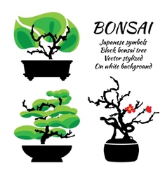 Bonsai set on a white background vector image vector image