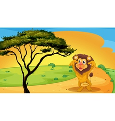 a lion playing on road vector image