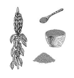 Hand drawn set of amaranth plant porridge in bowl vector