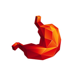Red low poly human stomach on a white background vector