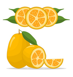 The kumquat vector