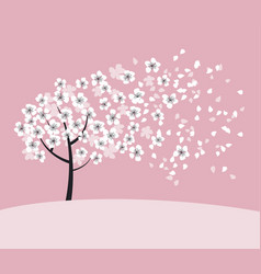 White sakura tree blossom on pink rosy background vector