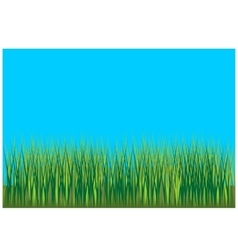 Grass background 001 vector image