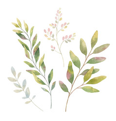 hand drawn watercolor set green branches vector image