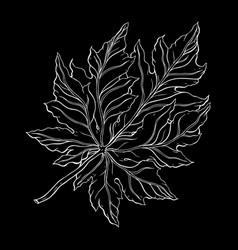 beautiful detailed leaf botanical hand drawn vector image
