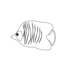 Chaetodon auriga butterflyfish coloring pages vector