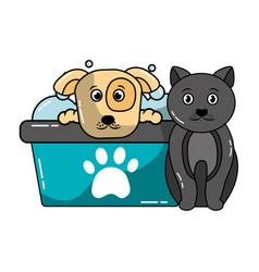 dog and cat pet grooming vector image