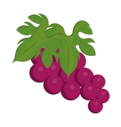 Purple bunch of gapes graphic vector