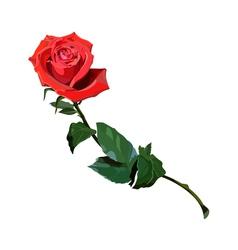 Rose scarlet vector