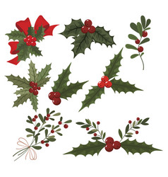set christmas flowers collection poinsettia vector image
