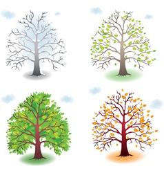 Tree in seasons vector