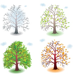 Tree in the seasons vector image vector image