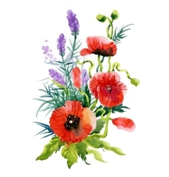 Watercolor Summer Garden Blooming Poppies Flower vector