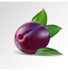 fresh plum on transparent background realistic vector image