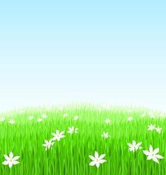 green grass flower field vector image