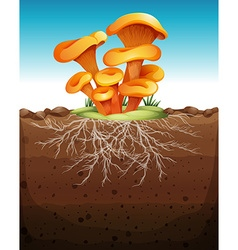 Mushroom in the ground vector