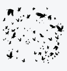Silhouette of a flock of birds black contours vector