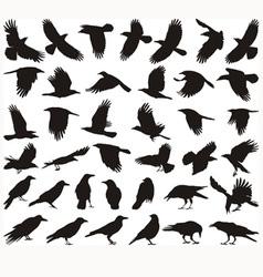 Bird carrion crow vector image vector image