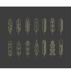 Linear feathers icons vector image