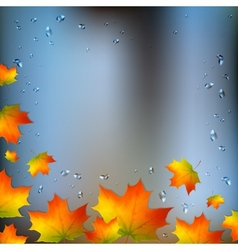 Autumn foliage on wet window vector