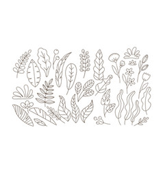 doodle leaves and flowers flat set vector image