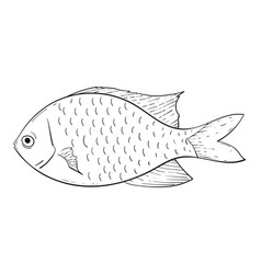 fish black and white drawing vector image