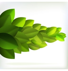 Fresh green leaves for summer design EPS10 vector image