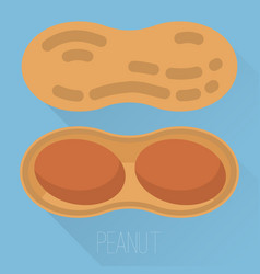 Peanut icon vector