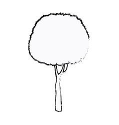 Tree foliage stem trunk sketch vector
