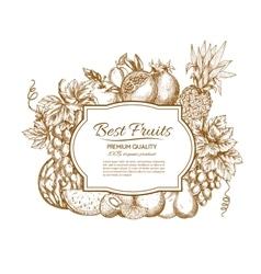Best fruits sketch poster vector