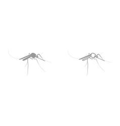 Mosquito it is black icon vector