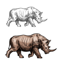 Rhinoceros sketch wild animal isolated icon vector