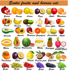 set exotic fruits and berries vector image