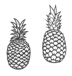 set of pineapple icons isolated on white vector image