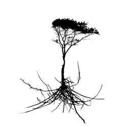 Tree Silhouette with root system Isolated on White vector