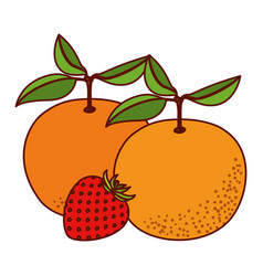 white background with set of fruits orange and vector image