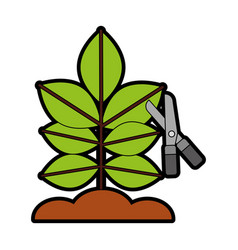 Cultivated plant with scissors vector