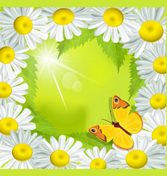frame of daisies vector image vector image