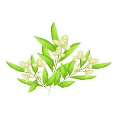 Beautiful Ylang Ylang Flowers vector image vector image