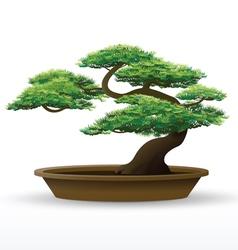 bonsai plant vector image vector image