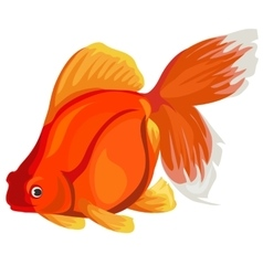 Golden fish on a white background vector image vector image