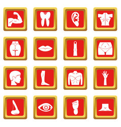 Body parts icons set red vector