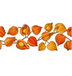 phisalis branch pattern vector image