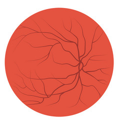 eye veins and vessels vector image vector image