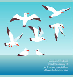 Atlantic seabirds flying background design vector
