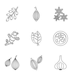 eco spices icon set outline style vector image