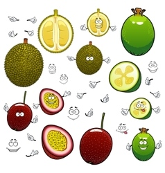 Exotic cartoon feijoa durian and maracuya fruits vector image