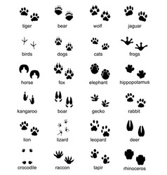 footprints wild animals vector image