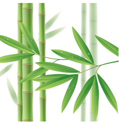 green bamboo stems with leaves on white vector image